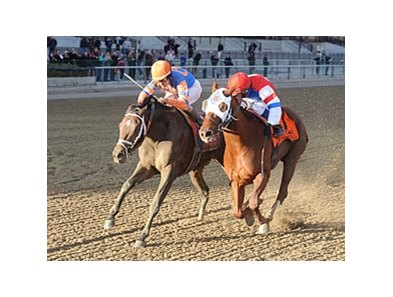 "Stay Thirsty (left) gets his head in front of Groupie Doll to win the Cigar Mile.<br><a target=""blank"" href=""http://photos.bloodhorse.com/AtTheRaces-1/at-the-races-2012/22274956_jFd5jM#!i=2234184754&k=dSLwqHZ"">Order This Photo</a>"