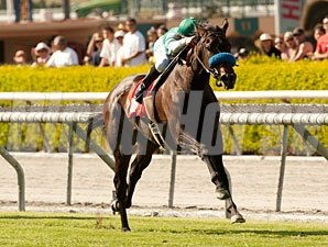 Lady of Shamrock wins the 2012 Providencia.