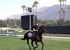 "No Nay Never<br><a target=""blank"" href=""http://photos.bloodhorse.com/BreedersCup/2014-Breeders-Cup/Works/i-Hnp94mM"">Order This Photo</a>"