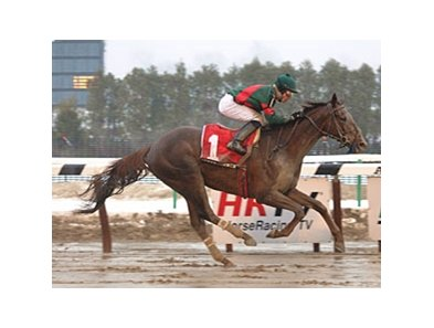 Toby's Corner in the 2011 Whirlaway Stakes.<br>