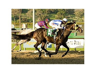 "San Carlos Handicap winner Surf Cat will carry top weight in the Potrero Grande.<br><a target=""blank"" href=""http://www.bloodhorse.com/horse-racing/photo-store?ref=http%3A%2F%2Fpictopia.com%2Fperl%2Fgal%3Fprovider_id%3D368%26ptp_photo_id%3D3591829%26ref%3Dstory"">Order This Photo</a>"