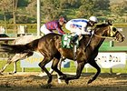 "San Carlos winner Surf Cat will attempt to win the Mervyn LeRoy Handicap for the 2nd time in three years.<br><a target=""blank"" href=""http://www.bloodhorse.com/horse-racing/photo-store?ref=http%3A%2F%2Fpictopia.com%2Fperl%2Fgal%3Fprovider_id%3D368%26ptp_photo_id%3D3591829%26ref%3Dstory"">Order This Photo</a>"