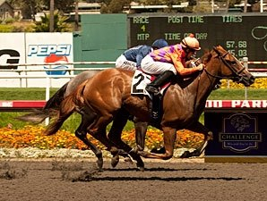 Killer Graces Leads Sorrento Field