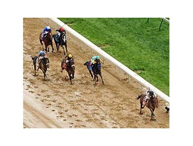 "Mine That Bird left his Derby foes far behind. <br><a target=""blank"" href=""http://www.bloodhorse.com/horse-racing/photo-store?ref=http%3A%2F%2Fgallery.pictopia.com%2Fbloodhorse%2Fgallery%2FS719439%2Fphoto%2F8065012%2F%3Fo%3D8"">Order This Photo</a>"