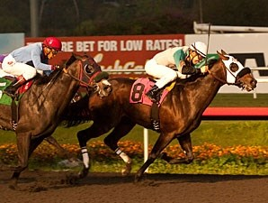Weewinnin wins the King Glorious Stakes.
