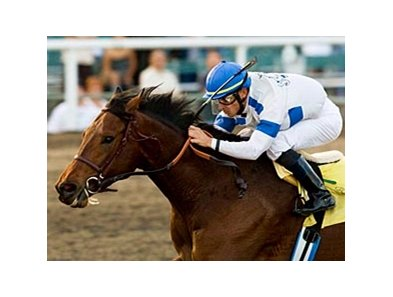 Chocolate Candy won the 2008 Real Quiet Stakes at Hollywood Park.