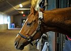 Wise Dan at the barn in December.