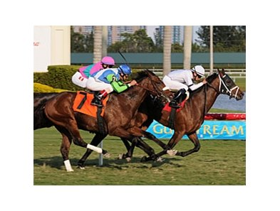 "Doubles Partner overtakes Lentenor at Gulfstream Park.<br><a target=""blank"" href=""http://www.bloodhorse.com/horse-racing/photo-store?ref=http%3A%2F%2Fpictopia.com%2Fperl%2Fgal%3Fprovider_id%3D368%26ptp_photo_id%3D8799820%26ref%3Dstory"">Order This Photo</a>"
