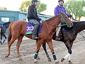 Starspangled Heat - Breeders' Cup 2014
