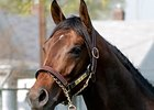 "Colonel John<br><a target=""blank"" href=""http://www.bloodhorse.com/horse-racing/photo-store?ref=http%3A%2F%2Fpictopia.com%2Fperl%2Fgal%3Fprovider_id%3D368%26ptp_photo_id%3D4335636%26ref%3Dstory"">Order This Photo</a>"