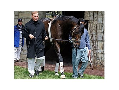 Pyro schooling in the Keeneland paddock on April 5.