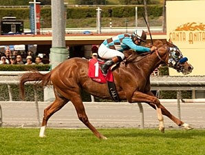 Rosengold wins the 2013 Baffle Stakes.