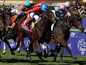 Dank Delivers in BC Filly & Mare Turf