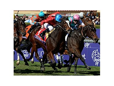 "Dank won the 2013 Breeders Cup Filly and Mare Turf. <br><a target=""blank"" href=""http://photos.bloodhorse.com/BreedersCup/2013-Breeders-Cup/Filly-and-Mare-Turf/33149865_HG9pBp#!i=2878133857&k=SX3cJMs"">Order This Photo</a>"