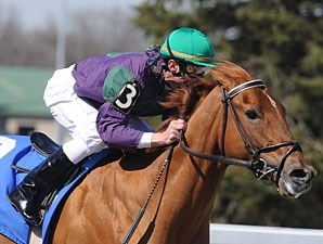 Cool Bullet wins the 2010 Hansel.