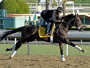 Handsome Mike at Santa Anita 10/29/2012.