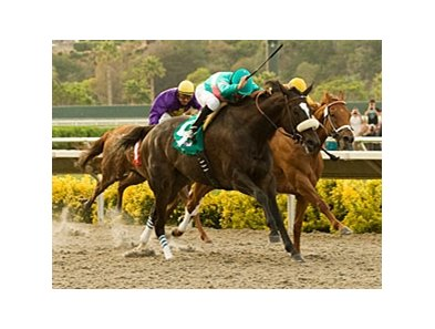 "Zenyatta captures her third Clement Hirsch.<br><a target=""blank"" href=""http://www.bloodhorse.com/horse-racing/photo-store?ref=http%3A%2F%2Fpictopia.com%2Fperl%2Fgal%3Fprovider_id%3D368%26ptp_photo_id%3D9133258%26ref%3Dstory"">Order This Photo</a>"