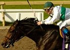 Van Lear Rose Up in Time to Win Mazarine