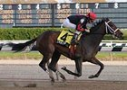 "Livin Lovin's win in the Tempted was 2-year-old's first graded stakes victory. <br><a target=""blank"" href=""http://www.bloodhorse.com/horse-racing/photo-store?ref=http%3A%2F%2Fpictopia.com%2Fperl%2Fgal%3Fprovider_id%3D368%26ptp_photo_id%3D6571313%0D%0A%26ref%3Dstory"">Order This Photo</a>"