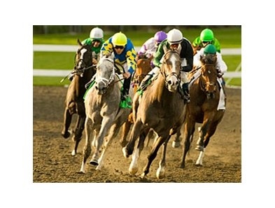 "The gray colts Take the Points (left) and The Pamplemousse enter the stretch in the Sham Stakes. <br><a target=""blank"" href=""http://www.bloodhorse.com/horse-racing/photo-store?ref=http%3A%2F%2Fgallery.pictopia.com%2Fbloodhorse%2Fgallery%2FS612719%2Fphoto%2F7833326%2F%3Fo%3D5"">Order This Photo</a>"
