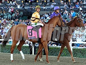 Wise Dan in the post parade for the 2013 Breeders' Cup Mile.