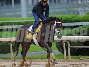 Stay Thirsty works Sunday in the slop at Churchill Downs.
