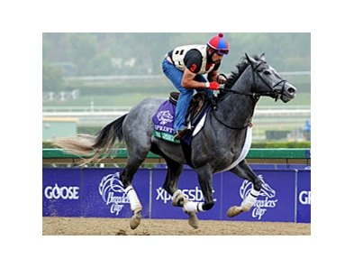 The Lumber Guy