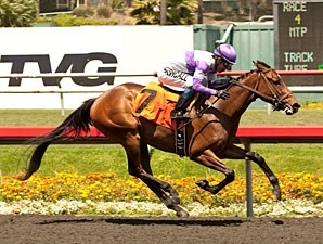 Sprouts wins the 2013 Cinderella Stakes.