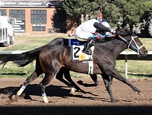 Sapello Cantador wins the 2013 University Of New Mexico Handicap.
