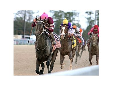 Sabercat leads them home in the Delta Downs Jackpot.