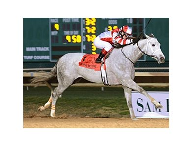 Joyful Victory won the Houston Ladies Classic Stakes in track-record time.