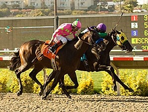 Unusual Suspect wins the Cougar II Stakes.