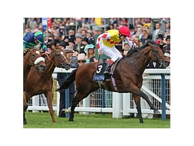 "Queen Anne Stakes' winner Haradasun<br><a target=""blank"" href=""http://www.bloodhorse.com/horse-racing/photo-store?ref=http%3A%2F%2Fpictopia.com%2Fperl%2Fgal%3Fprovider_id%3D368%26ptp_photo_id%3D4915768%26ref%3Dstory"">Order This Photo</a>"