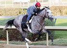 Paddy O'Prado breezed five furlongs over a fast track in 1:01.