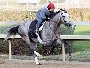 Paddy O Prado Horse Profile Bloodhorse