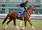 Smiling Tiger