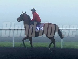 Rich Tapestry (IRE) preps for the Dubai World Cup at Meydan 3/6/2014.