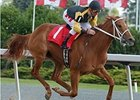 Dancing Allstar brings a six-race winning streak into the Azalea (gr. III) at Calder Race Course July 12.