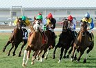 Mr. Vegas won the 2012 Col. E. R. Bradley Handicap.