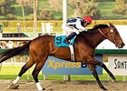 "Strub winner Monterey Jazz is one of the highweights in a well-matched Santa Anita Handicap.<br><a target=""blank"" href=""http://www.bloodhorse.com/horse-racing/photo-store?ref=http%3A%2F%2Fpictopia.com%2Fperl%2Fgal%3Fprovider_id%3D368%26ptp_photo_id%3D3468386%26ref%3Dstory"">Order This Photo</a>"