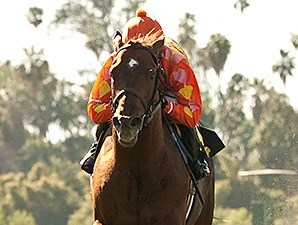 Tom's Tribute wins the Thunder Road Stakes.