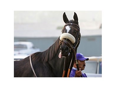 "Zenyatta<br><a target=""blank"" href=""http://www.bloodhorse.com/horse-racing/photo-store?ref=http%3A%2F%2Fpictopia.com%2Fperl%2Fgal%3Fprovider_id%3D368%26ptp_photo_id%3D8609471%26ref%3Dstory"">Order This Photo</a>"