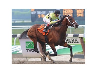 "Met Mile winner Quality Road<br><a target=""blank"" href=""http://www.bloodhorse.com/horse-racing/photo-store?ref=http%3A%2F%2Fpictopia.com%2Fperl%2Fgal%3Fprovider_id%3D368%26ptp_photo_id%3D9047698%26ref%3Dstory"">Order This Photo</a>"