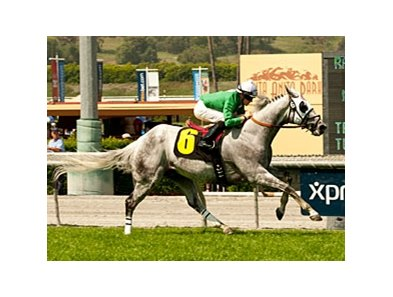 California Flag flies to victory in the San Simeon.