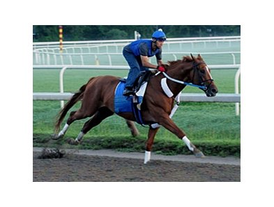 Curlin, shown working last week at Saratoga, posted a six furlong move over the Oklahoma Training Track on Monday, Aug. 11.
