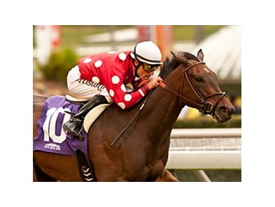 Purim's Dancer won the 2013 Wishing Well Stakes.