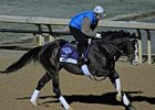 "Courageous Cat<br><a target=""blank"" href=""http://www.bloodhorse.com/horse-racing/photo-store?ref=http%3A%2F%2Fpictopia.com%2Fperl%2Fgal%3Fprovider_id%3D368%26ptp_photo_id%3D9722572%26ref%3Dstory"">Order This Photo</a>"