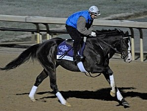Courageous Cat - Churchill Downs, October 29, 2011.