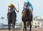 "Live Lively (right) and Dreaming of Julia finished 1-2 in the Davona Dale on Feb 23.<br><a target=""blank"" href=""http://photos.bloodhorse.com/AtTheRaces-1/at-the-races-2013/27257665_QgCqdh#!i=2379020368&k=WrLjNcX"">Order This Photo</a>"
