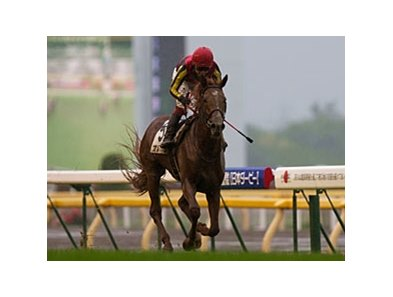 Orfevre wins the Japanese Derby
